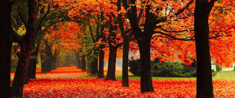 10-dingen-weer-doen-herfst