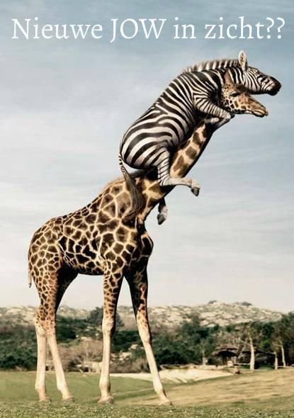 jow giraf