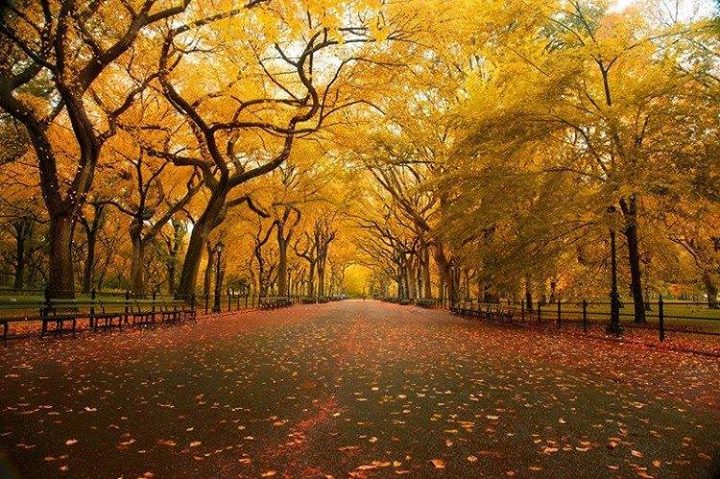 New York's Central Park in the Automn (3)